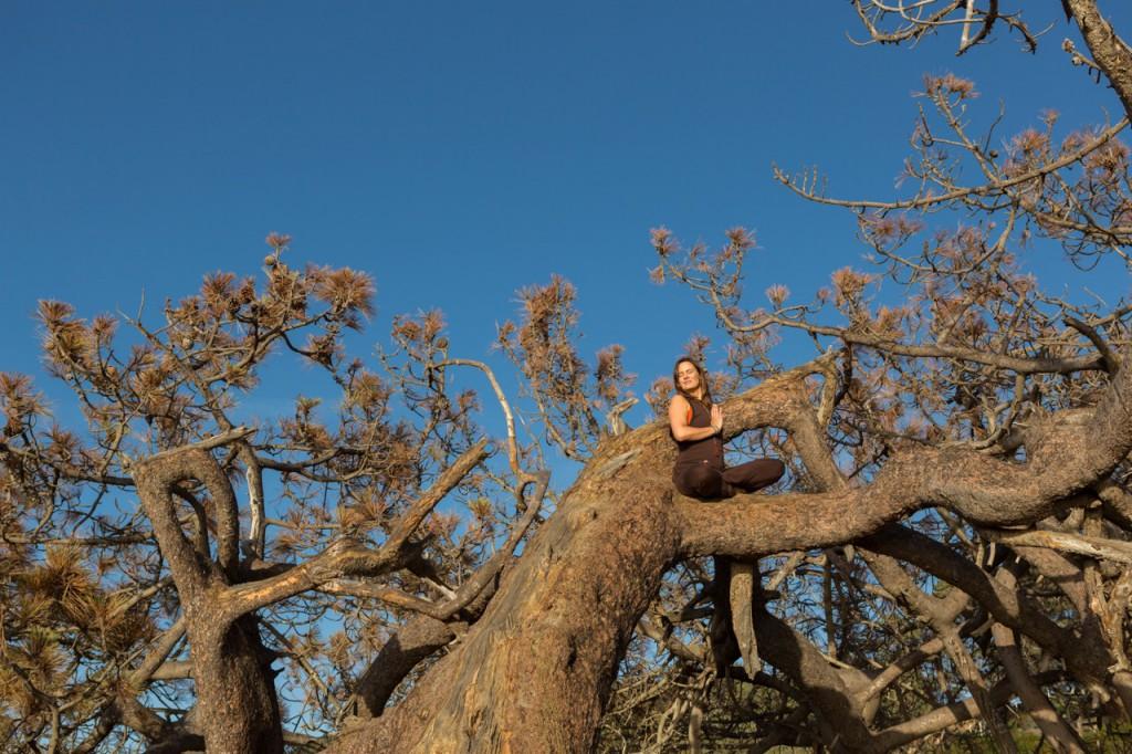 nybønitræ
